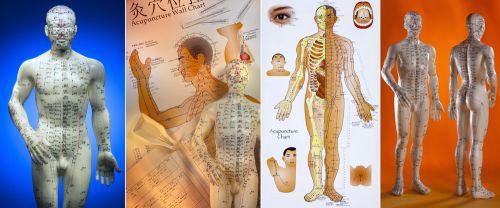 tcmvysocina.cz , bylinky , tradiční čínská medicína , zdaví ,akupunktura