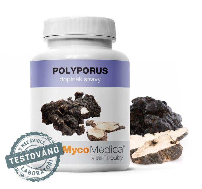 Polyporus (choroš oříš) MycoMedica